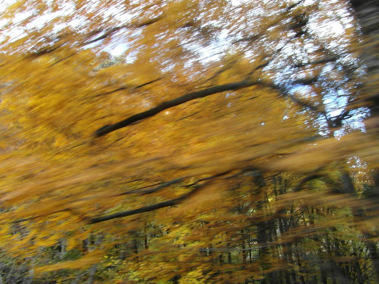 Colores otoño.